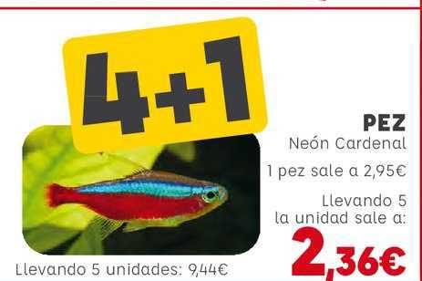 Kiwoko 4+1 Pez Neón Cardenal