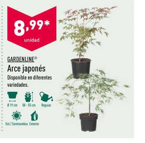 ALDI Gardenline Arce Japonés