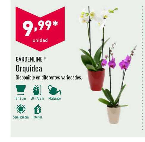 ALDI Gardenline Orquídea