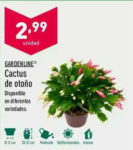 ALDI Gardenline Cactus De Otoño