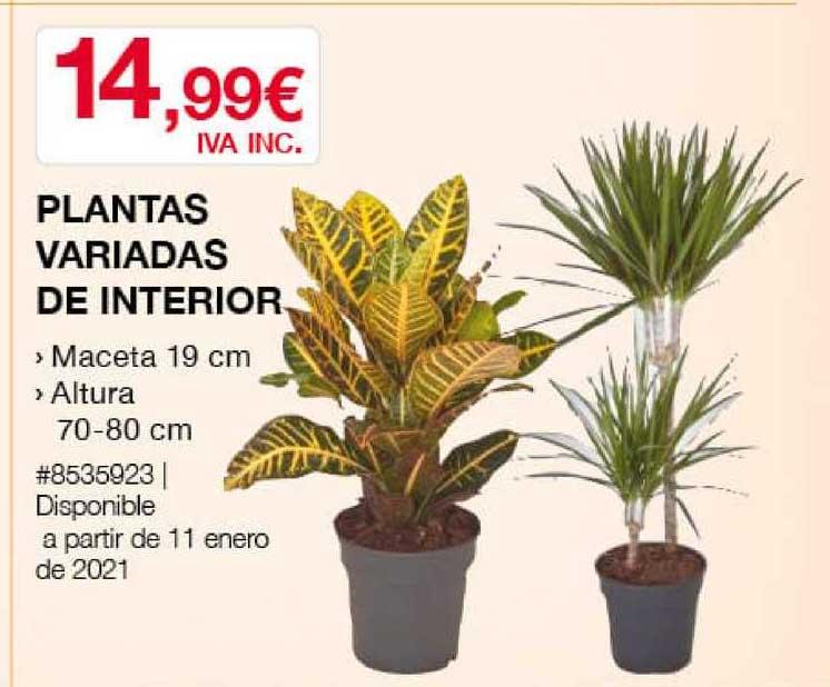 Costco Plantas Variadas De Interior