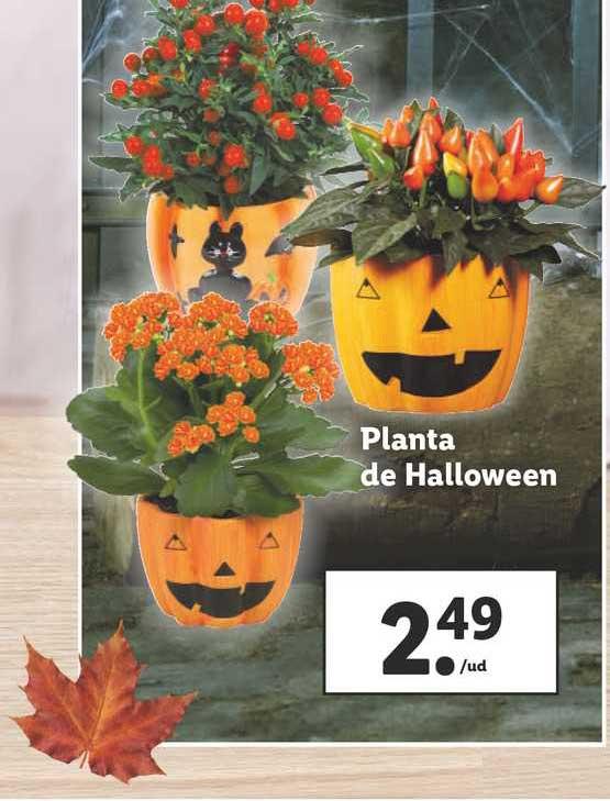 LIDL Planta De Halloween
