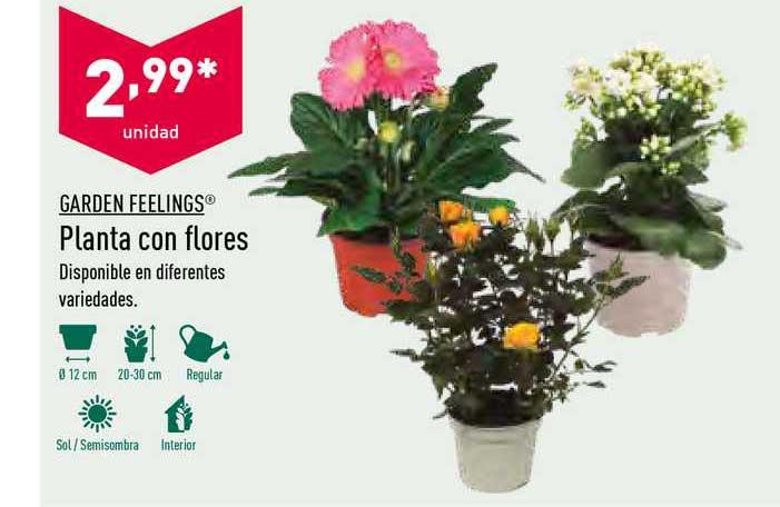 ALDI Garden Feelings Planta Con Flores
