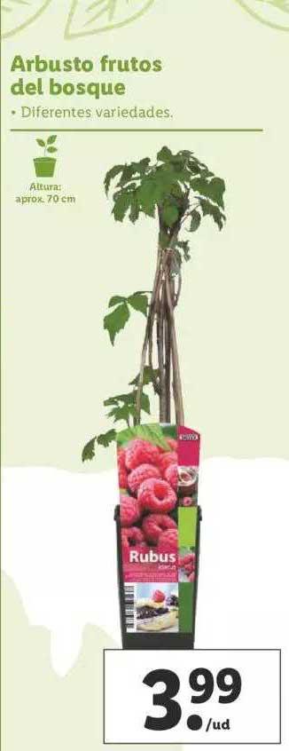 LIDL Arbusto Frutos Del Bosque