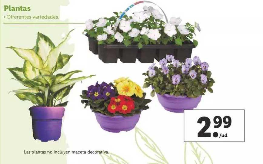 LIDL Plantas
