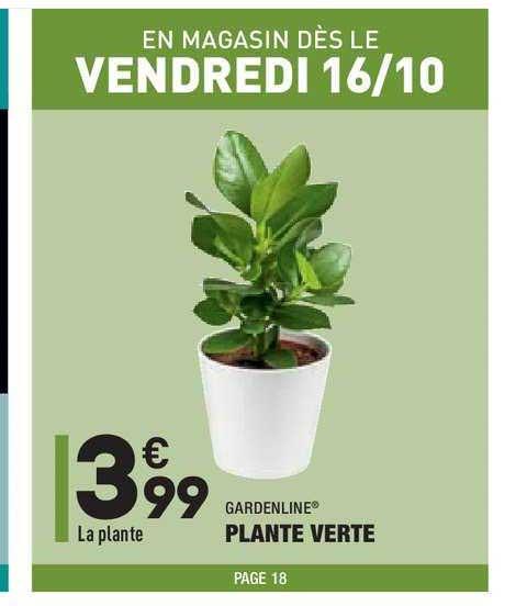 Aldi Plante Verte Gardenline