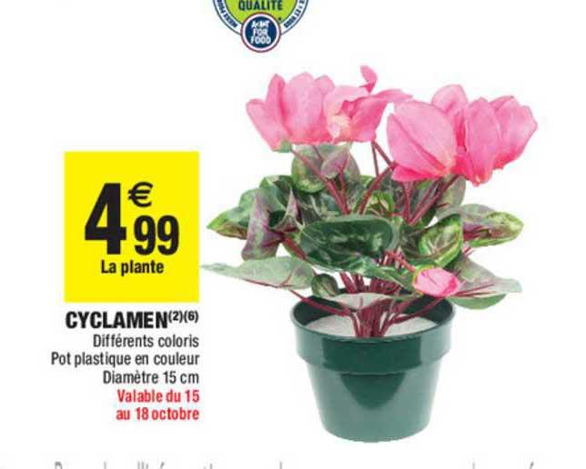 Carrefour Market Cyclamen