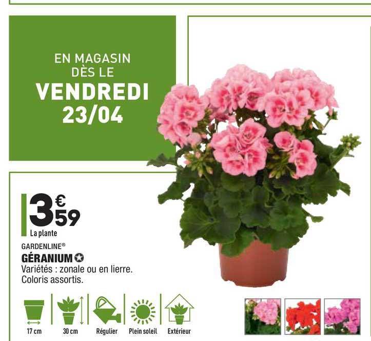 Aldi Géranium Gardenline