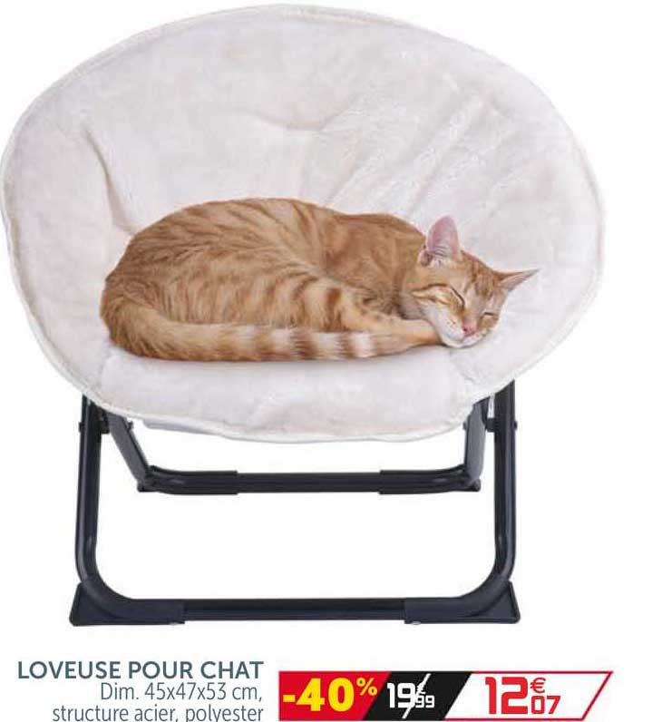 GiFi Loveuse Pour Chat