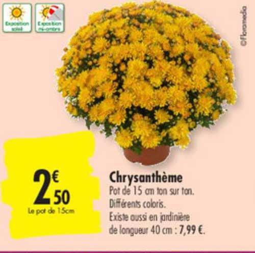 Carrefour Chrysanthème
