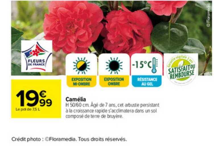 Carrefour Camélia