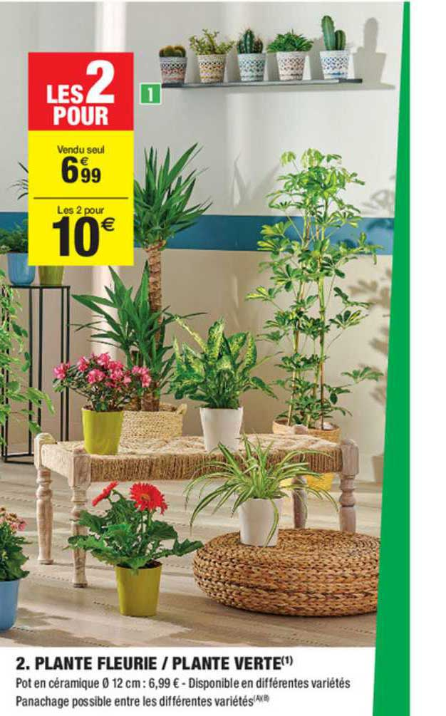 Carrefour Market Plante Fleurie Plante Verte
