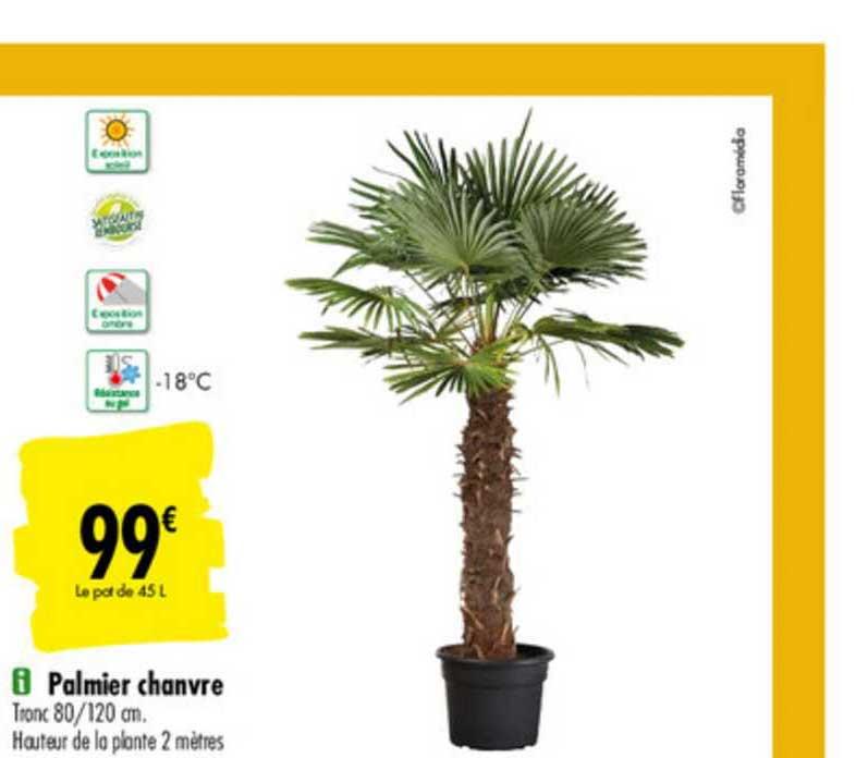 Carrefour Palmier Chanvre