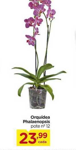 Carrefour Orquídea Phalaenopsis