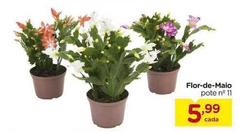 Carrefour Flor De Maio Pote N°11
