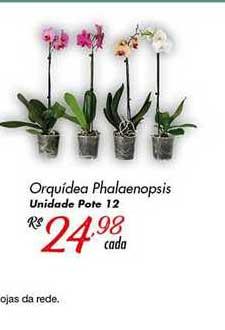 Super Muffato Orquídea Phalaenopsis