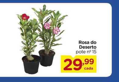 Carrefour Rosa Do Deserto