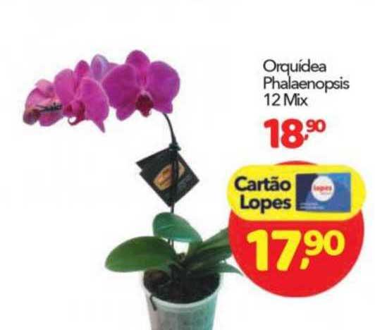 Lopes Supermercados Orquídea Phalaenopsis
